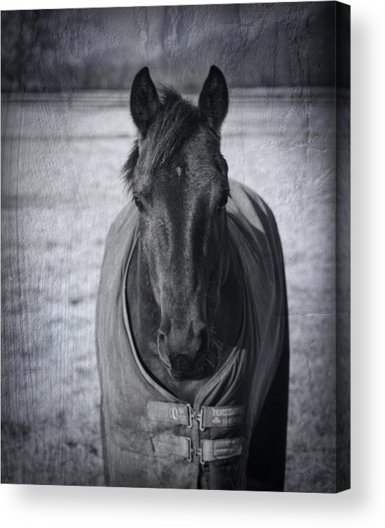 Horse Acrylic Print featuring the photograph Horse Grunge by Kathy Clark