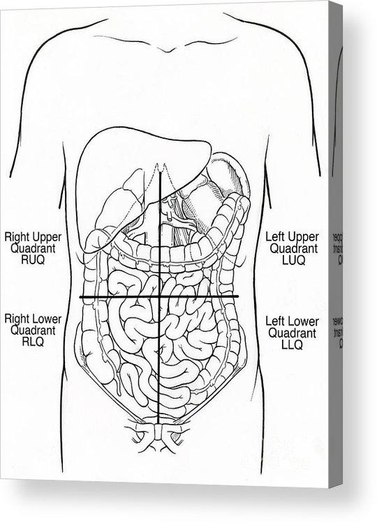 Illustration Of Abdominal Quadrants Acrylic Print By