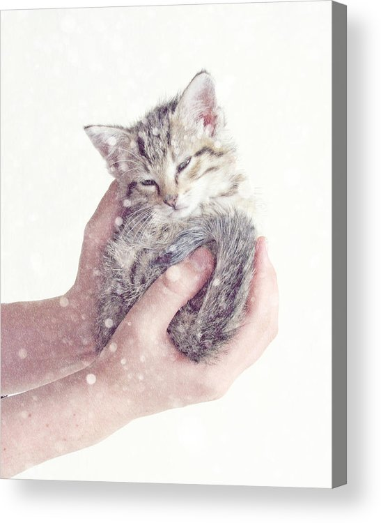 Kitten Acrylic Print featuring the photograph In Safe Hands by Amy Tyler