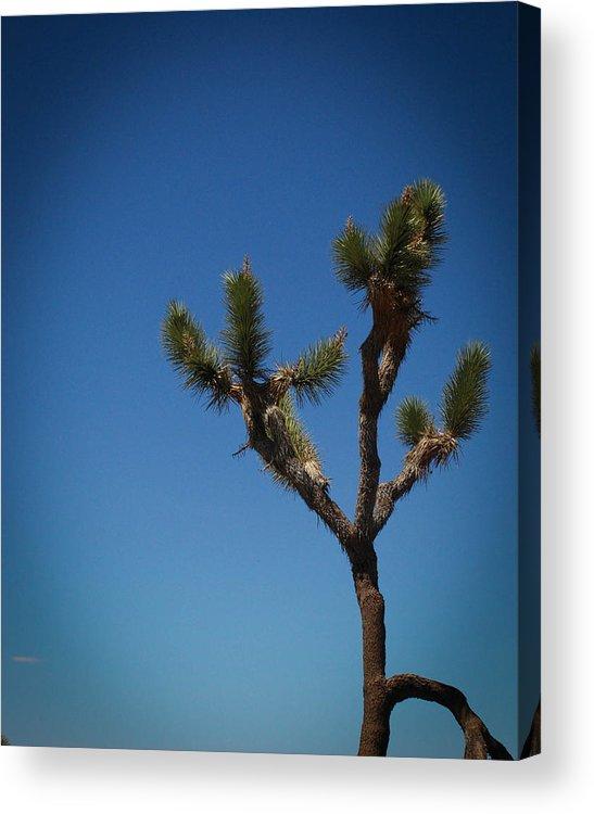 National Acrylic Print featuring the photograph Joshua Tree 2 by Regis Keddie