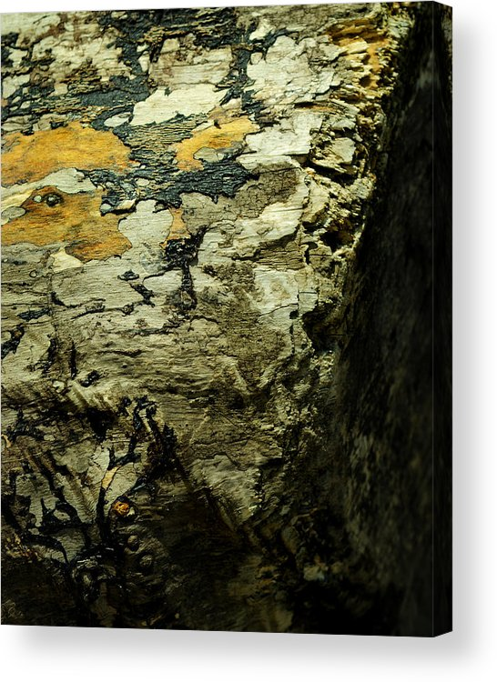 Driftwood Acrylic Print featuring the photograph Life Story by Rebecca Sherman