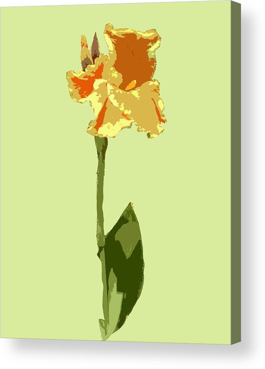 Flower Acrylic Print featuring the digital art Orange And Yellow Flower by Karen Nicholson