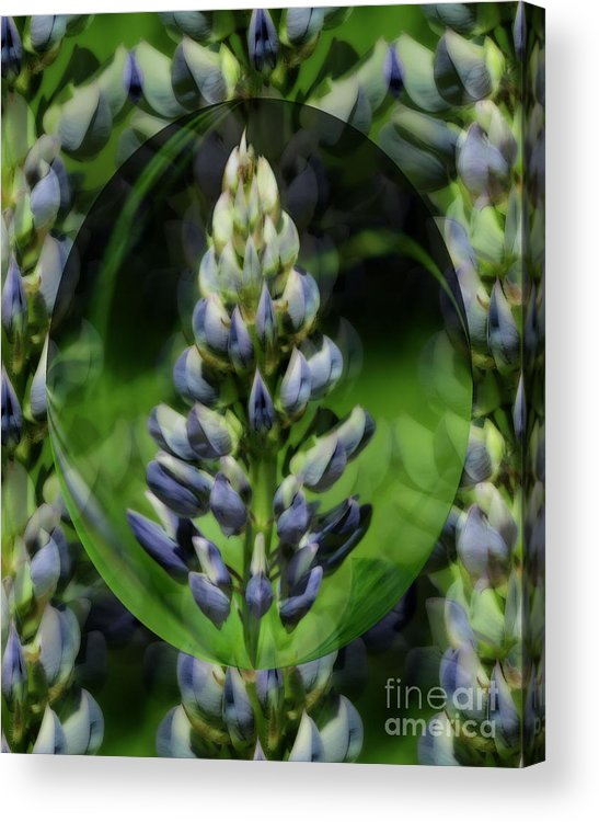 Flower Acrylic Print featuring the photograph Purple Lupine Beauty by Smilin Eyes Treasures