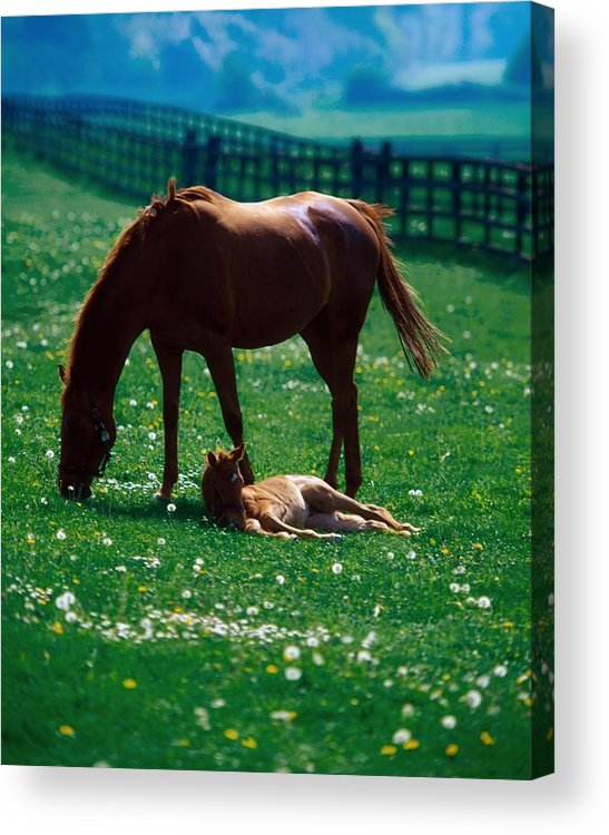 Color Image Acrylic Print featuring the photograph Thoroughbred Mare And Foal, Ireland by The Irish Image Collection