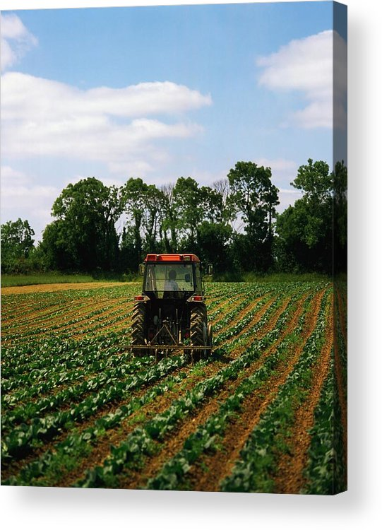 Backhoe Acrylic Print featuring the photograph Weeding A Cabbage Field, Ireland by The Irish Image Collection
