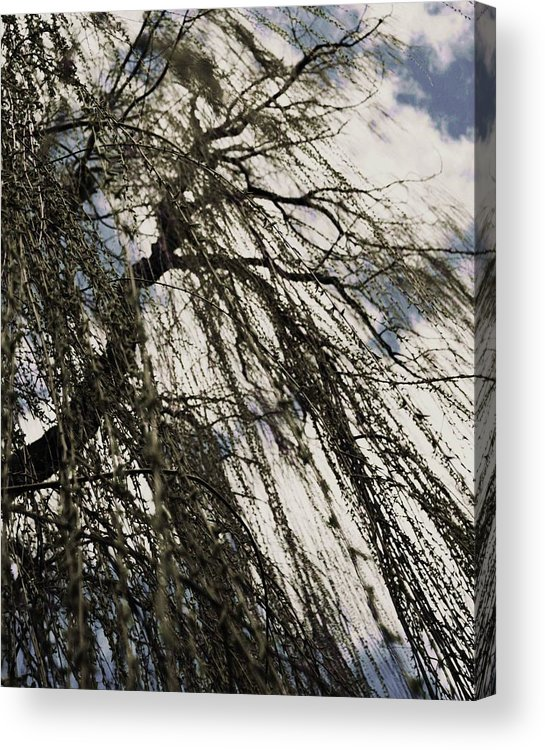 Willow Tree Acrylic Print featuring the photograph Willow Tree by Todd Sherlock