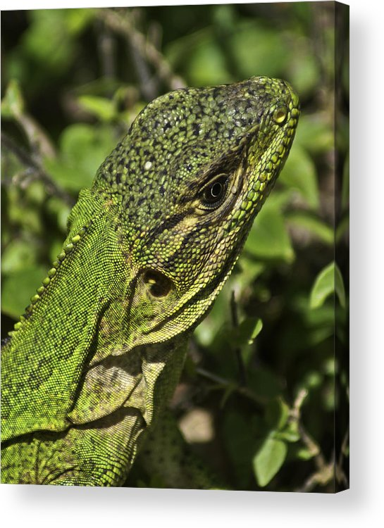 Green Acrylic Print featuring the photograph You Can't See Me by John Black