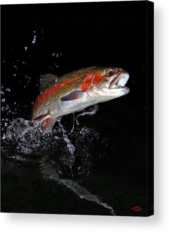 Rainbow Trout Acrylic Print featuring the photograph 3d Rainbow by Brian Pelkey