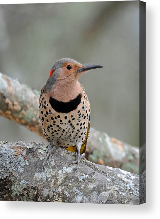 Flicker Acrylic Print featuring the photograph A Flicker Of Sunshine In Winter by Amy Porter