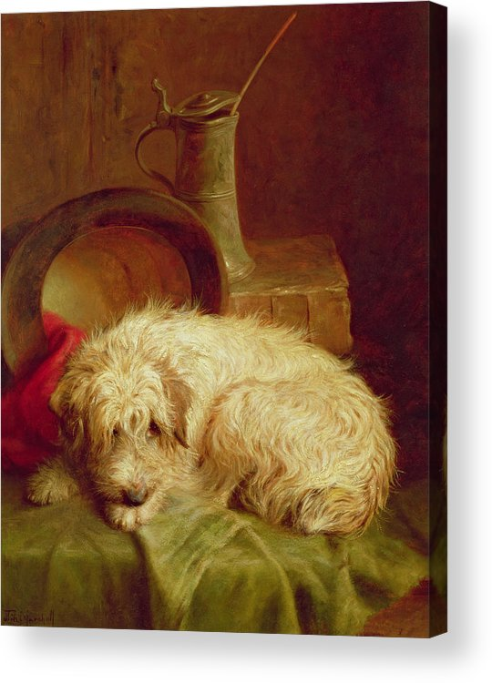 Terrier Acrylic Print featuring the painting A Terrier by John Fitz Marshall