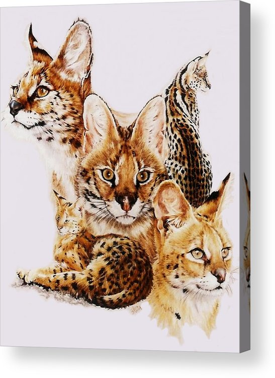 Serval Acrylic Print featuring the drawing Adroit by Barbara Keith