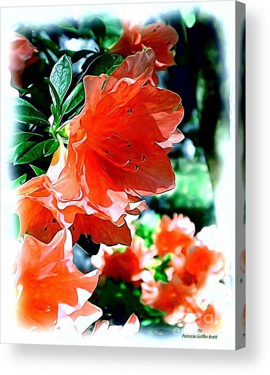 Fine Art Acrylic Print featuring the painting Azaleas In The Spring by Patricia Griffin Brett