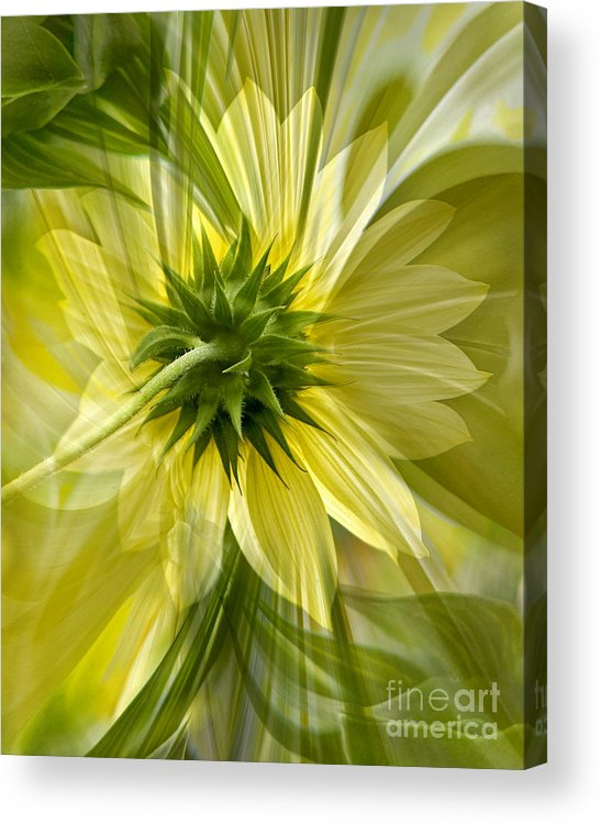 Floral Acrylic Print featuring the photograph Back Petal by Chuck Brittenham