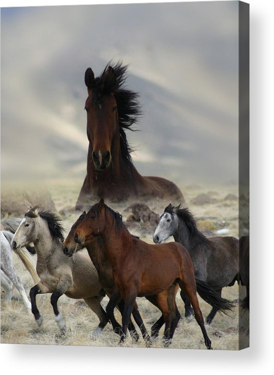 Horse Acrylic Print featuring the photograph Band Of One by Gene Praag