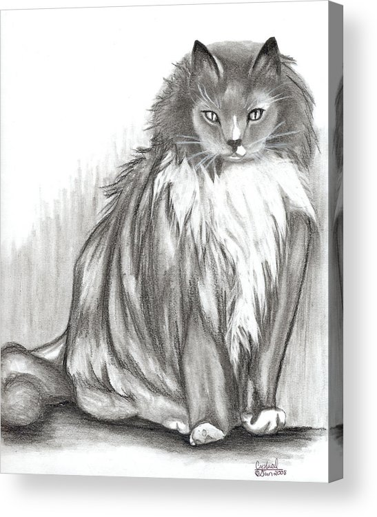 Cats Acrylic Print featuring the drawing Carl by Crystal Suppes