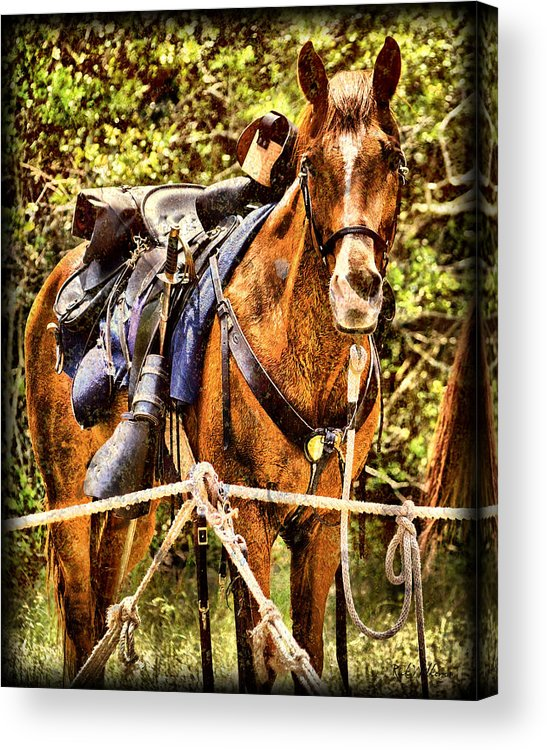Civil War Acrylic Print featuring the photograph Cavalry Horse Circa 1864 by Rick Wilkerson