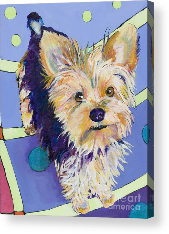 Pet Portraits Acrylic Print featuring the painting Claire by Pat Saunders-White