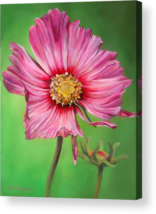 Floral Painting Acrylic Print featuring the painting Cosmos by Dolemieux muriel