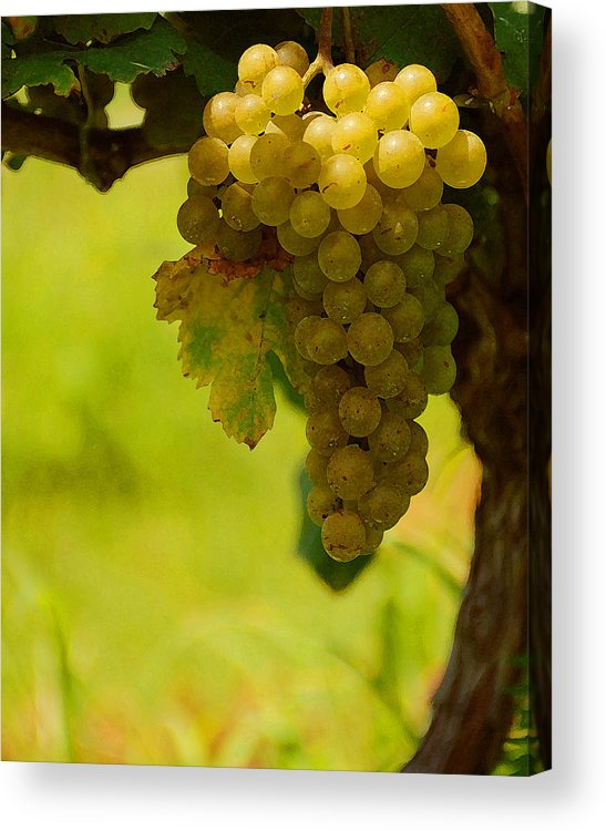 Grapes Acrylic Print featuring the photograph Grapes by Travis Aston