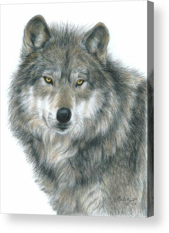 Wolf Acrylic Print featuring the drawing Haunting Eyes by Carla Kurt