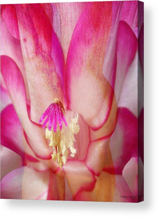 Fleurotica Art Acrylic Print featuring the digital art Meld by Torie Tiffany