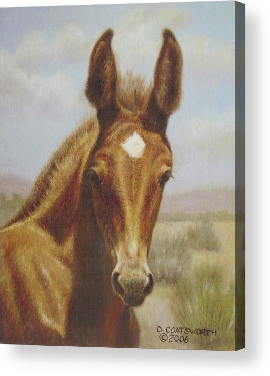 Acrylic Print featuring the painting Molly Mule Foal by Dorothy Coatsworth