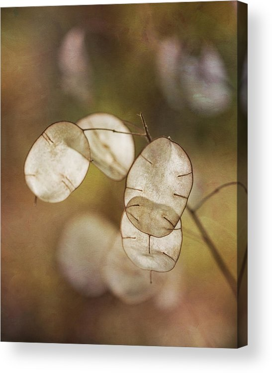 Money Plant Acrylic Print featuring the photograph Money Plant by Dale Kincaid