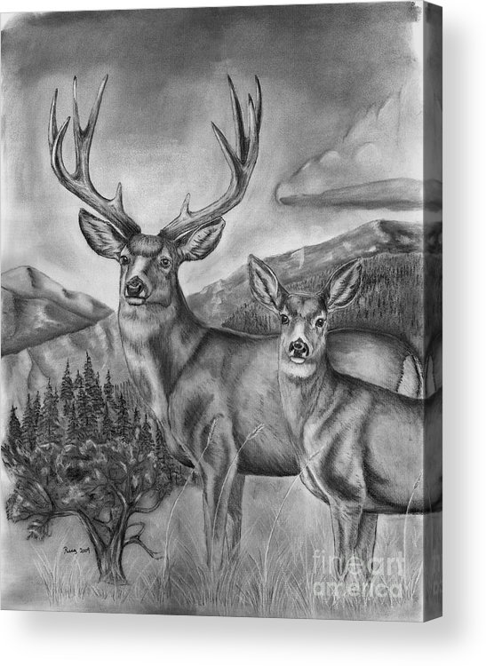 Wildlife Acrylic Print featuring the drawing Mule Deer Heaven by Russ Smith