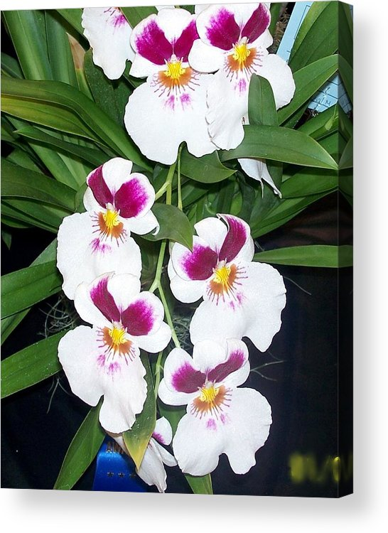 Orchids Acrylic Print featuring the photograph Orchids In Bloom by Marlene Puza