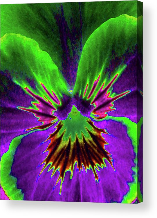 Pansy Acrylic Print featuring the photograph Pansy 02 - Photopower - Thoughts Of You by Pamela Critchlow