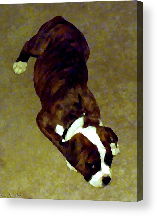 Dog Acrylic Print featuring the photograph Sleepy Puppy by Elise Samuelson