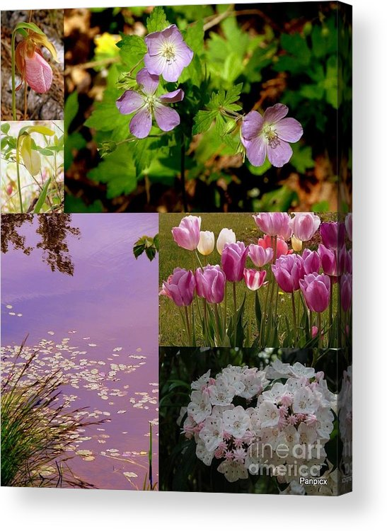 Wild Acrylic Print featuring the photograph Spring Has Sprung... by Priscilla Richardson