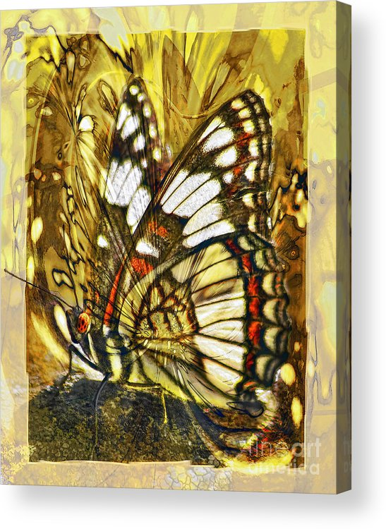 Butterfly Acrylic Print featuring the digital art Stained Glass Butterfly by Chuck Brittenham