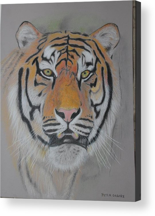 Tiger Acrylic Print featuring the painting Tiger Portrait by Peter Graore