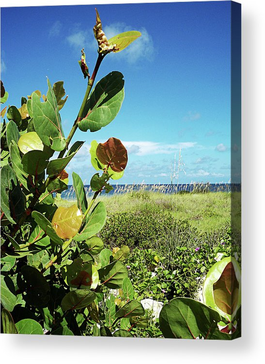 Florida Acrylic Print featuring the photograph To The Sky Gp by Chris Andruskiewicz