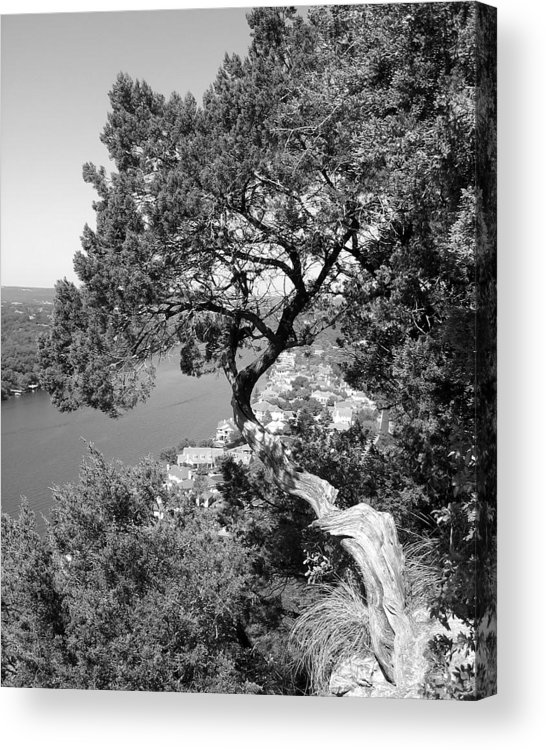 Mount Bonnell Acrylic Print featuring the photograph Tree On Mount Bonnell by Lindsey Orlando