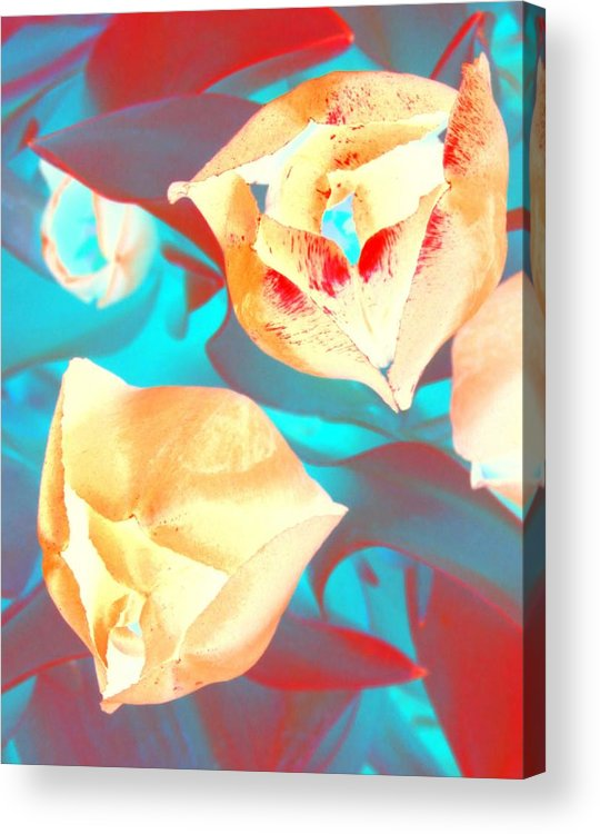 Tullips Acrylic Print featuring the photograph Tullip Glow by Tiffany Vest