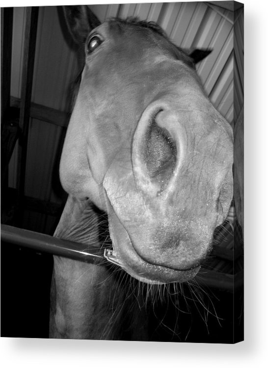 Horse Acrylic Print featuring the photograph Up The Nose by Lindsey Orlando