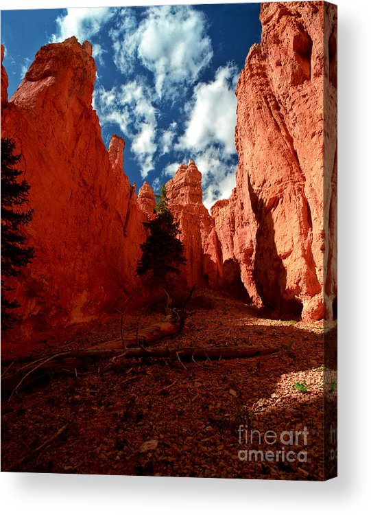 Bryce Canyon National Park Acrylic Print featuring the photograph Utah - Bryce Canyon by Terry Elniski