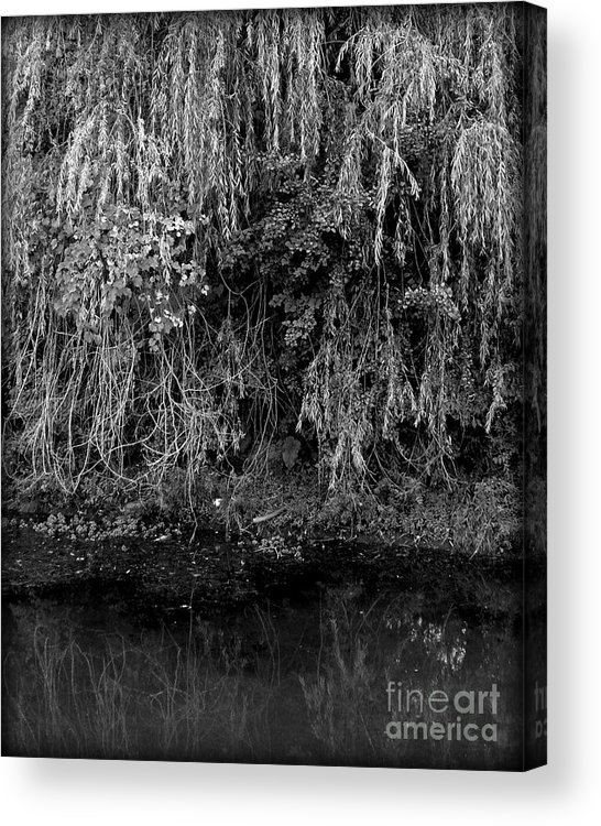 Black And White Acrylic Print featuring the photograph Weeping Willow by Emily Kelley