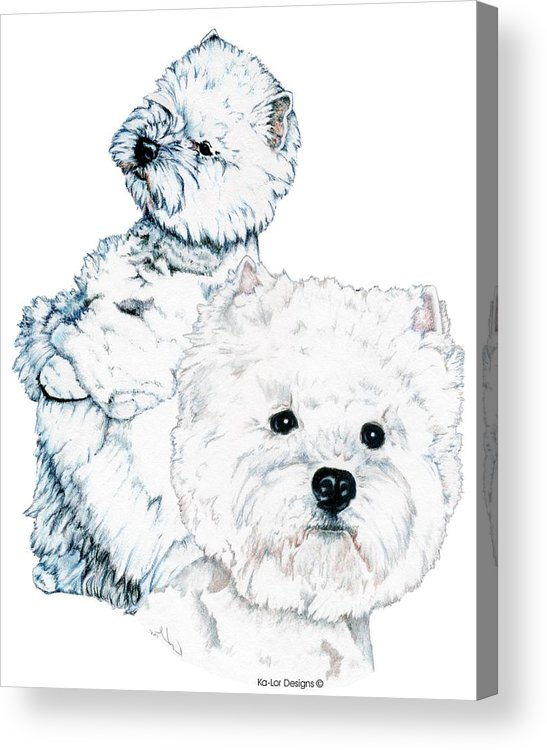 West Highland White Terrier Acrylic Print featuring the drawing West Highland White Terriers by Kathleen Sepulveda