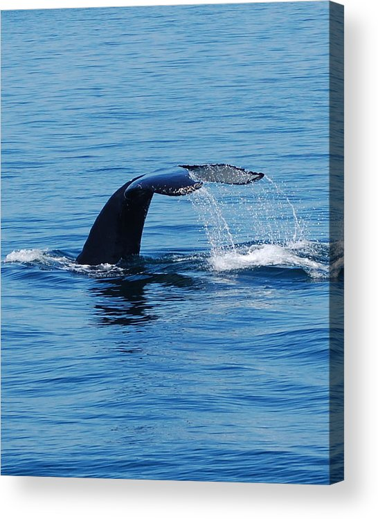 Whales Acrylic Print featuring the photograph Whales Tale by Lisa Kane