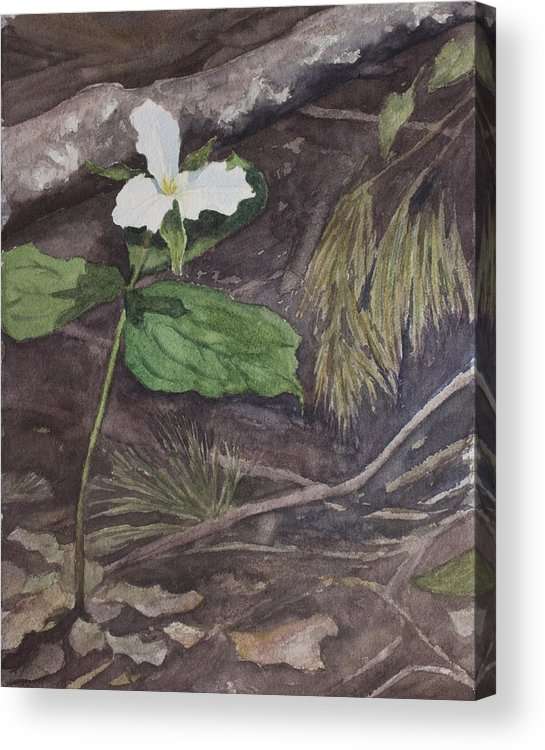 White Trillium Acrylic Print featuring the painting White Trillium by Debbie Homewood