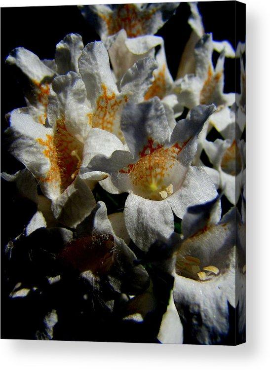 Lisa Jayne Konopka Acrylic Print featuring the photograph Wild White by Lisa Jayne Konopka