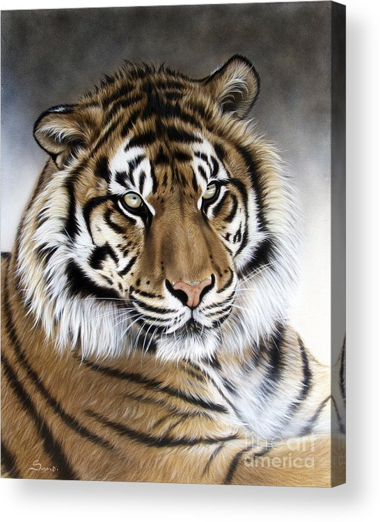 Tiger Acrylic Print featuring the painting ZEN by Sandi Baker