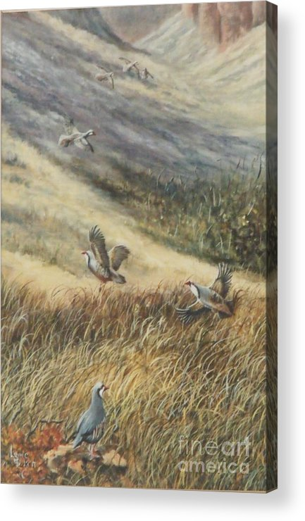 Chukars In Flight Acrylic Print featuring the painting Chukars In Flight by Lynne Parker