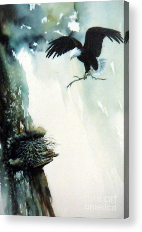 Eagle With Branch Acrylic Print featuring the painting Eagle building Nest. by Lynne Parker