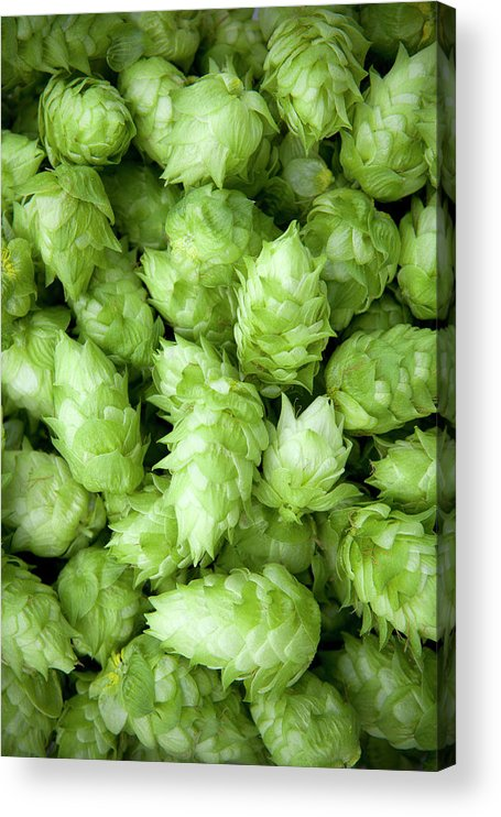 Alcohol Acrylic Print featuring the photograph Fresh Hops by Licreate