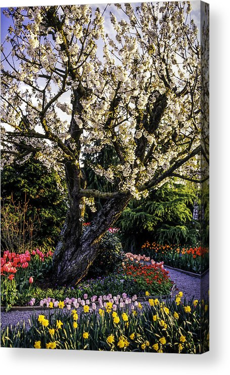 Tranquility Acrylic Print featuring the photograph Glorious Spring Blooming, Stanley Park, Vancouver, British Columbia, Canada by Pierre Longnus