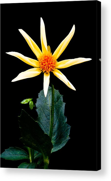 Flower Acrylic Print featuring the photograph Happy Morning by Paul Johnson